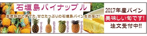 石垣島パイン 美味しい旬到来!